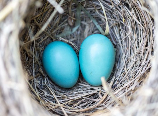 Diversify Your Investments: 5 Baskets for Your Nest Eggs