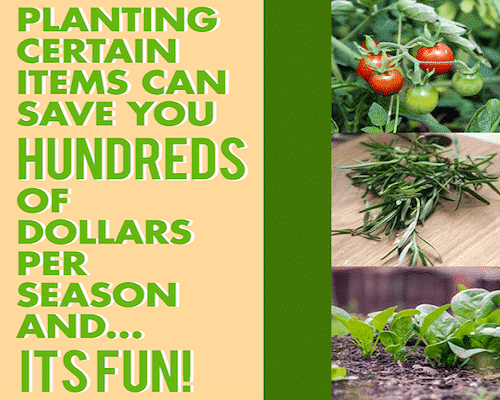 How to invest your money - start a garden