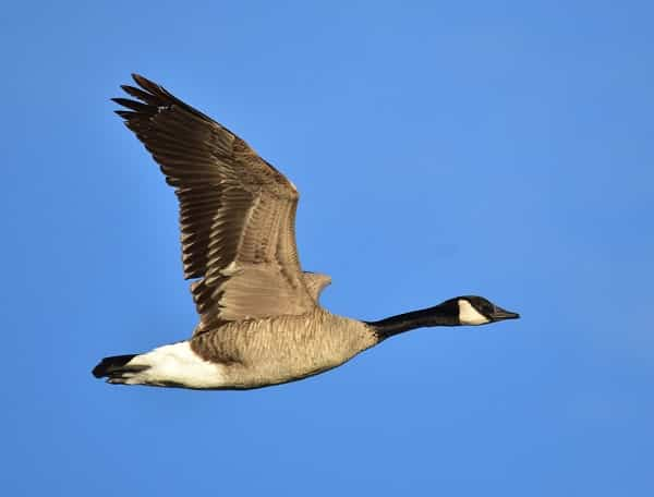 Best Stocks On The TSX - Canada Goose